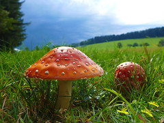 Vor dem Donnerwetter... (Mariandl48) Tags: gewitter pilze fliegenpilz gras blumen sommersgut wenigzell steiermark austria