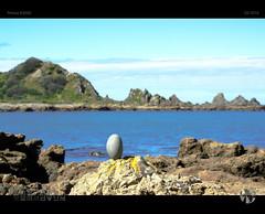 Balancing Act (tomraven) Tags: rocks balance dof coast coastal shoreline island tomraven araveimage water rockpools sunshine composition q32016 pentax k200d