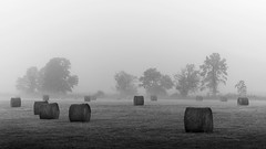 Hay Bales In Morning Fog (shutterclick3x) Tags: hay bales meadow fog blackandwhite bw backroads frankloose haystacks