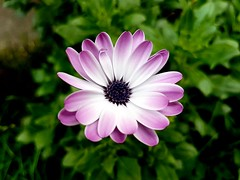 Something beautiful (medwards1120) Tags: samsunggalaxys7edge samsung london flower bokeh nature