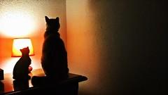 Flins... Pour l'autre!!! ;-) (Isa****) Tags: flins chat poterie lumire orang romantique