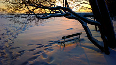 A seat in sunset (Antti Tassberg) Tags: winter sunset tree mobile espoo suomi finland bench nokia twilight europe seat cellphone eu scandinavia talvi puu westend auringonlasku uusimaa 808 penkki evenfall istuin karhusaari phoneography hanki pureview linholmsfjärden nokiaukphotography