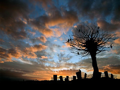 graveyard shift (B Gilmour.) Tags: sky graveyard clouds interesting twilight gothic humour graves mygearandme mygearandmepremium mygearandmebronze mygearandmesilver mygearandmegold mygearandmeplatinum bestevercompetitiongroup cemetarysilhouette