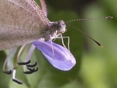 Butterfly (newzild) Tags: macro eye butterfly insect four flash olympus m micro malaysia backlit 60mm zuiko f28 lumut backlighting thirds ep3 perak m43 6028 fl600r