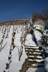 Winterimpression: Mosel-Weinberge bei Winningen (wein_reich) Tags: schnee winter deutschland mosel wein weinberg rheinlandpfalz winningen weinurlaub weinhänge weinregion