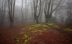 Epping Forest (Mohain) Tags: tree london fog forest landscape moss foggy essex epping