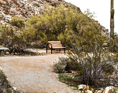 070/365: What Could You Be Waiting For? 2013-03-11 (George (Patti) Larcher (333K Views - Thank you!)) Tags: nature feast bench for all with shot you or year captured el best your leap mundo por house dabba  photos day art pictures best a flickr desertscape shot 2013 give colors colors a photography images eyes catchy photos group project today beauty 365 want 365 less experience pic perfect doo click distinguished 2013 everyone 365around click 3662012 yabba montera