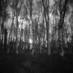 Strength in Numbers holga 120pc 2nd roll pinhole (joe_relic37) Tags: park camera trees ireland white black 120 6x6 square photography holga pond long exposure quiet time kodak traditional eerie location pinhole spooky roll plus medium format northern lensless ilford fp4 canoscan secluded 125 xtol 120pc 9000f