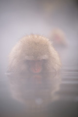 Meditate (www.jasonarney.com) Tags: reflection japan relax monkey wildlife  onsen nagano saru hotsprings  snowmonkey   japanesemacaque yudanaka  snowmonkeys    jigokudanipark