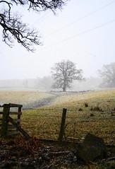 Farmland Outside Kenmore (KatrinaMason) Tags: trees winter nature scotland countryside farm perthshire farmland kenmore scottishcountryside