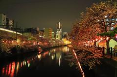 OOOKAGAWA (biarritz73) Tags: japan 桜 日本 sakura yokohama kanagawa 夜景 横浜 大岡川 oookagawa