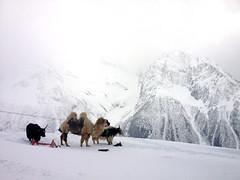 Nature (Ekaterina Sotova) Tags: winter snow mountains snowboarding march spring russia extreme camel holydays madnes caucas 2013 dombay karachaycherkessia
