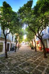 Barrio de Santa Cruz (Di Gutti (diegogutierrez79@gmail.com)) Tags: trees light santacruz tree luz arbol sevilla arboles seville andalucia andalusia barrio hdr gettyimages sevilha siviglia barriodesantacruz diegogutierrez arvre sevillan canoneos450d sevillban
