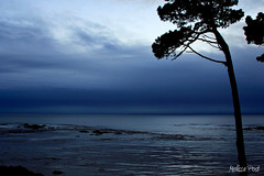 Evening Blues (San Francisco Gal) Tags: ocean california blue sea sky cloud seascape tree water silhouette rock fog landscape coast pacific bank mendocino bluehour coth5
