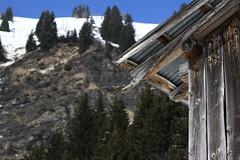 vieux bois (Philippe Stanus photographies) Tags: winter mountain snow france alps montagne alpes french hiver neige hautesavoie samoens coldejouxplane 74340 74440 valledugiffre stanus philippestanus
