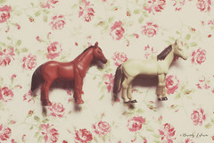 two horses (life stories photography) Tags: horse stilllife floral toys march spring dreamy twohorses 2013 beverlylefevre