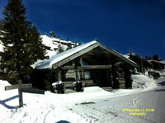 Snow Nieve (Pepe (ADM)) Tags: nature helsinki nieve mygearandme mygearandmepremium rememberthatmomentlevel1 rememberthatmomentlevel2