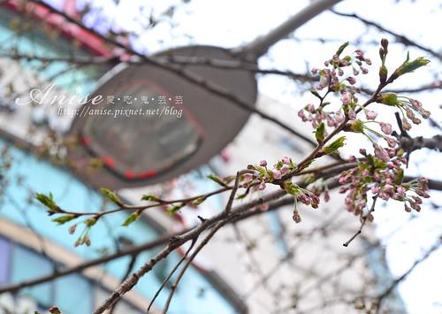 汝矣島櫻花_029.jpg