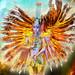 Goddess Nebula