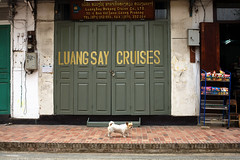 8182 LuangSay cruises (Mishel Breen) Tags: street door wood old sleeping urban dog pet white house color building cute green texture home look animal animals stone wall architecture vintage puppy asian outdoors grey wooden asia estate outdoor style front dirty retro domestic frame stray elegant laos luangprabang
