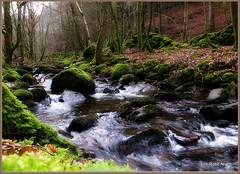 Birnam Glen (eric robb niven) Tags: landscape cycling scotland spring dundee glen hills dunkeld birnam canong12 ericrobbniven