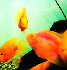 pet fish smile vet