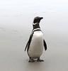 "32 Saunder's Island, Falklands • <a style=""font-size:0.8em;"" href=""http://www.flickr.com/photos/36838853@N03/8653070879/"" target=""_blank"">View on Flickr</a>"
