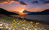 Spring sunset (Vagelis Pikoulas) Tags: flowers blue trees light sunset sea sky sun mountain mountains west flower colour reflection tree green beach clouds daisies canon landscape eos spring kiss europe niceshot view greece porto western daisy 1855mm x4 attiki vilia germeno 2013 550d abigfave colorphotoaward mygearandme kithairwnas mygearandmepremium mygearandmebronze ringexcellence blinkagain musictomyeyeslevel1