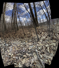 IMG0144iPH5  Dried Leaves   2013 Paul Light (Paul Light) Tags: sky autostitch leaves clouds landscape lexington massachusetts greatmeadows