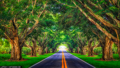 Road-Underneath-the-Bayan-Trees-Hobe-Sound-Florida