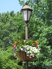 Gloucester Main Street Flower Light Pole Baske...