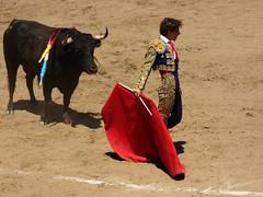 Abel Robles (aficion2012) Tags: ceret 2016 novillada corrida toros bulls bull fight novillos france francia d mario y hros de manuel vinhas abel robles