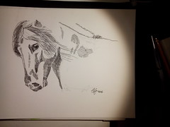 Proud to be a Fjord - copy (# annola) Tags: horse drawing disegno cavallo fjord bw biancoenero tratteggio hatching