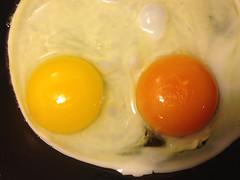 Sin ttulo (cbrozek21) Tags: egg food