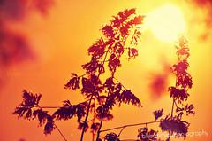 sunset (blueandyou.photography) Tags: sun sunset sonnenuntergang orange nature natur beauty blueandyouphotography nikon