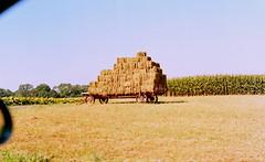 hay wagon / mamiya m645 (bluebird87) Tags: farm amish hay wagon dx0 c41 epson v600 film kodak ektar 100 mamiya m645