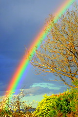 A RAINBOW before the STORM (elliott.lani) Tags: sky skies rainbow rainbows colour color colourful bright vibrant pretty beautiful foliage trees blue bluesky