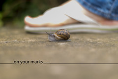 On your marks (9of365) (Reckless Times) Tags: snail race shell skug slug home feet flip flop flipflop your marks onyourmarks srarting line startingline summer rain nikond750 nikon 365 project