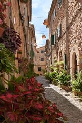 Valldemossa, Mallorca (DaEinKai) Tags: flower mallorca balears ballearen island spain nikon d5300 nikon5300 koet3r koet3rkai house plant old town view outdoor