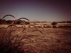 En el Campo (Vintage lens lover) Tags: mallorca balearen spanien landleben landschaft tramuntana grser natur em1 zuiko1240
