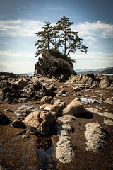 WCT - Day 4 - Tree Stack (yeahwotever) Tags: island west coast trail vancouver british columbia canada hike camp rain forest trees green beach shelf rock foreshore driftwood