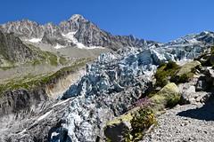 Chaos de Glaces Glacier Chaos (CHAM BT) Tags: glacier langue glace montagne roche rocher granite moraine fleur serac ice mountain rock stone granit flower neige snow fantasticnature