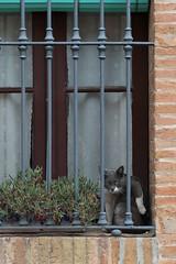 P7031889.jpg (8ware) Tags:   cat m43 spain travel espaa coloniagell