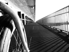 Cycling Over Skytrain Bridge (Erich J. Harvey) Tags: bridge vancouver cycling pugs skytrain utatafeature fatbike sulybikes tw354 utatatw354