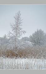 Birch-tree (aka malec) Tags: trees winter sky white mountain snow cold tree ice grass fog clouds forest petals frost loneliness sam box joy poland polska dry petal willow same birch zima spruce birchtree nieg ld mrz trawa drzewo chmury niebo sucha brzoza rado biay samotno wierk zimno patki patek