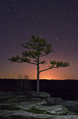 Cosmic Tree (Jeka World Photography) Tags: