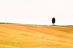 Lonely Cypress Tree (5ERG10) Tags: pink trees sky italy orange tree green classic sergio grass lines june yellow horizontal landscape nikon san holidays europe italia grove postcard minimal hills clear val tuscany cypress lonely cloudless toscana simple albero cypresses minimalist rolling colline boschetto tuscan dorcia d300 cipressi quirico amiti ondulate 5erg10