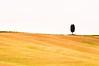 Lonely Cypress Tree (5ERG10) Tags: pink trees sky italy orange tree green classic sergio grass lines june yellow horizontal landscape nikon san holidays europe italia grove postcard minimal hills clear val tuscany cypress lonely cloudless toscana simple albero cypresses minimalist rolling colline boschetto tuscan dorcia d300 cipressi quirico amiti ondulate 5erg10