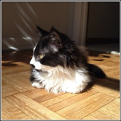 Kitten! (merrickball) Tags: cat square kitten squareformat finnegan stinks iphoneography instagramapp uploaded:by=instagram foursquare:venue=50f985e8e4b0e1894c0e5653