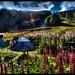 Camping In Ushuaia.